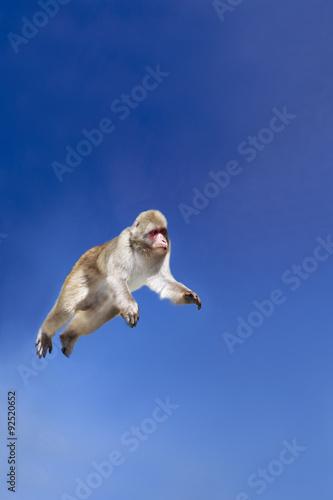 In de dag Aap 青空の下ジャンプする日本猿