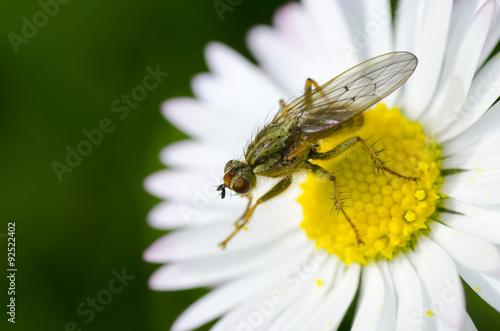 Fotografía  Mosquito