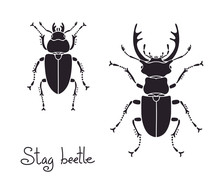 Male And Female Stag Beetle, L...