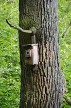 Tree With Birdhouse