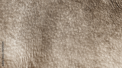 Fotoposter Neushoorn White rhino skin texture background