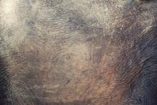 Texture Of Elephant Skin