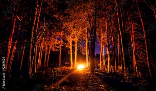 Garden Poster Brown Dark forest