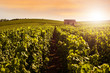 canvas print picture - Champagne Vineyards at sunset, Montagne de Reims, France