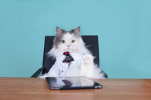 Cat Big Boss In The Office