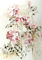 Obraz na Plexi Stylized aquarelle drawing of Cosmos flowers