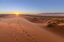 Oryx Tracks To Sunset