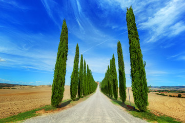 Fototapeta Cypress trees road in Tuscany, Italy