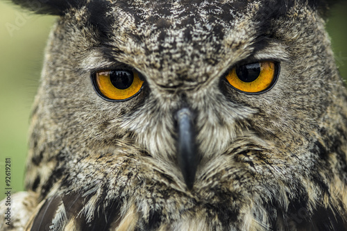 owl and her beautiful eyes