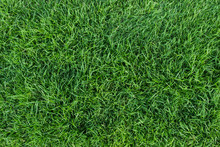 Green Grass Texture