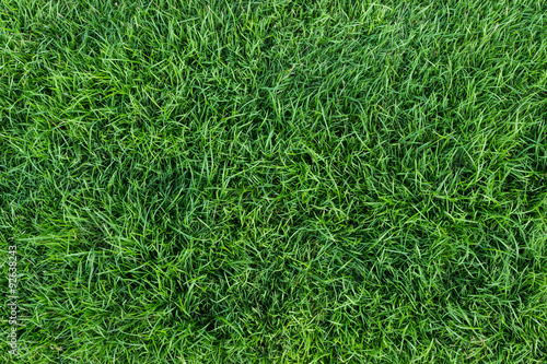 Poster Meadow green grass texture