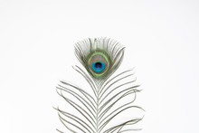 Peacock Feathers, Isolated On White Background