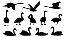 Swan Silhouettes