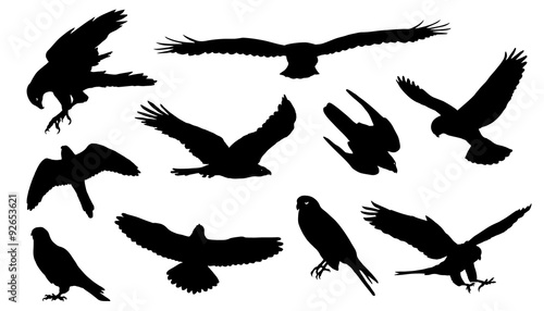 Photo falcon silhouettes