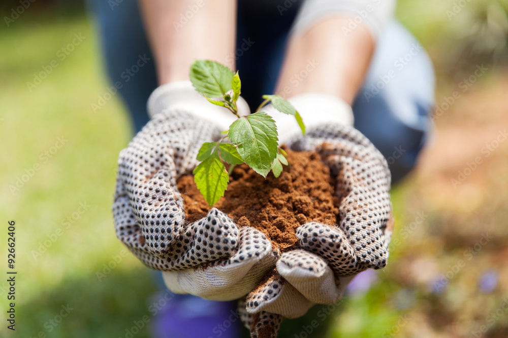 Fototapety, obrazy: hands in gloves with soil and a plant