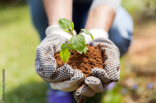 hands in gloves with soil and a plant Fototapet