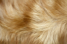 Brown Dog Fur Background