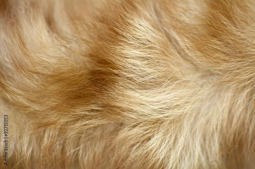 Brauner Hundefellhintergrund Fototapete