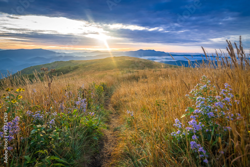 Valokuva  The ancient Blue Ridge Mountains come alive when the morning sun rises over the Roan Mountain Highlands exposing the beautiful wildflowers