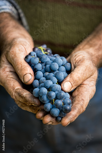 Farmers hands with cluster of grapes плакат