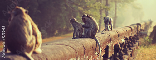 Obraz Monkey. Long-tailed macaque. Macaca fascicularis - fototapety do salonu
