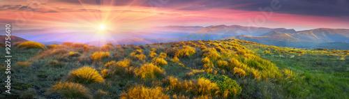 Fototapeta Grass - hedgehogs obraz