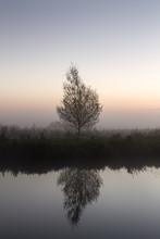 Tree Along A River, Early In The Morning. Tree Is Reflected In The Water.