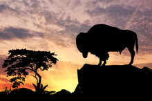 Silhouette Of The Buffalo