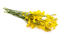 Broom Isolated On White