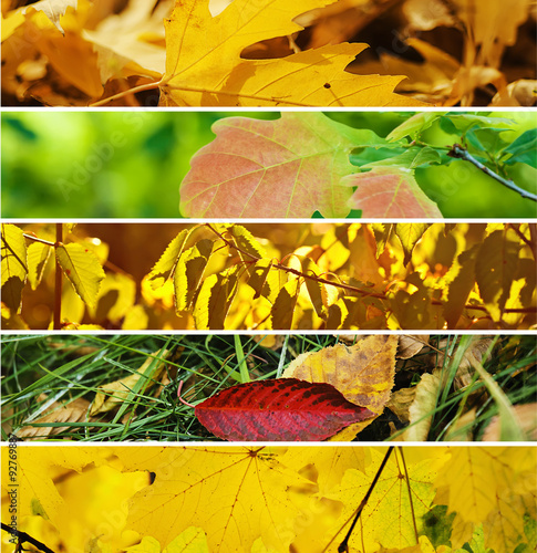 Stampe  Autumn collection