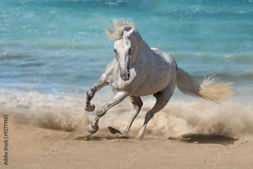 Beautiful horse run along the shore of the sea Poster