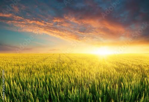 Photo Stands Melon Filed during bright sunset. Agricultural landscape in the summer time