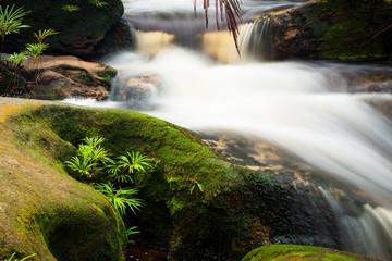 Fototapeta na wymiar Small stream in jungle