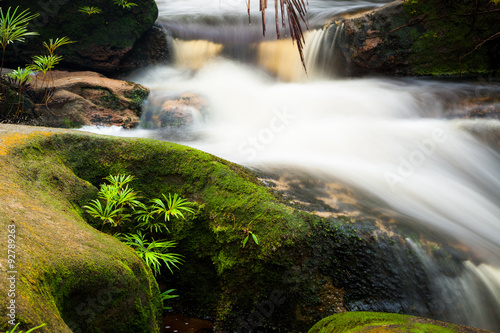 Fototapeta Small stream in jungle
