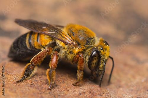 Honey Bee search for mineral Tapéta, Fotótapéta