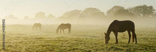 Foto auf Leinwand Pferde Verschwinden im Morgennebel