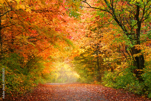 Photo Bright autumn trees in Allegheny national forest