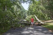 Tree Down Across Road Blocking Access