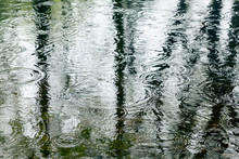 Water Surface With Trees Reflection