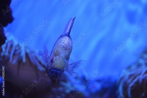 Fotografie, Obraz  Vztek ryby