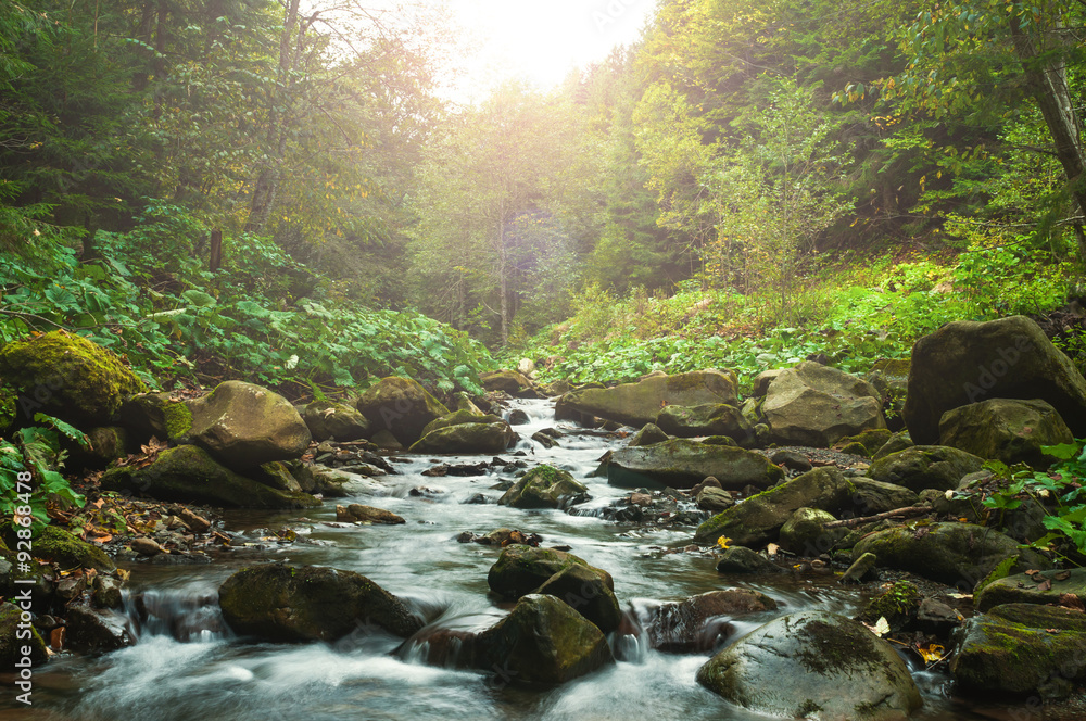 Fototapeta Creek in woods