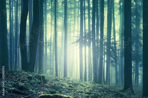 Fotobehang Bossen Magical blue green saturated foggy forest trees landscape. Color filter effect used. Picture was taken in south east Slovenia, Europe.