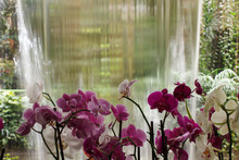 Orchids On Waterfall  Background