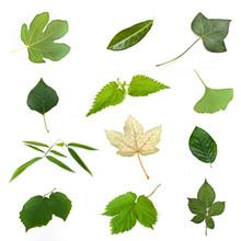 Composition De Feuilles Vertes D'arbres Sur Fond Blanc