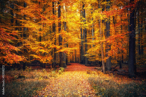 Aluminium Prints Road in forest Autumn park