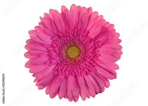 Tuinposter Gerbera Pink gerber flower