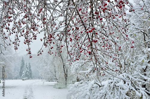 Foto-Leinwand ohne Rahmen - Snowfall in city park- winter background (von rvo233)