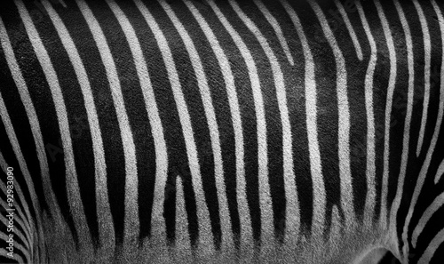 Photo sur Aluminium Zebra zebra stripes closeup texture. Monochrome