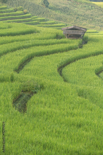 Deurstickers Rijstvelden Terraced Rice fields