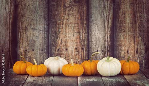 Fotografie, Obraz  Mini pumpkins in a row against rustic wooden background